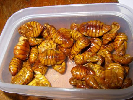 カイコ蛹(燻製)