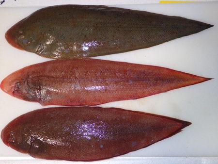 シタビラメ3種を食べ比べる